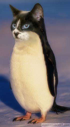 Photos du pingouin - Page 3 Vva3a2ef